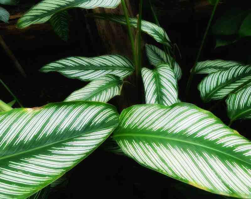 Comment faire revivre une plante ?