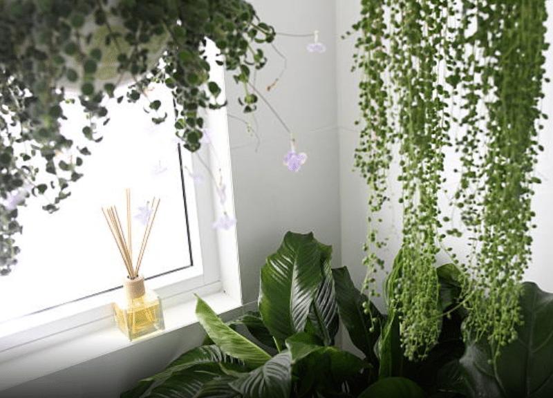Comment faire revivre vos plantes ?