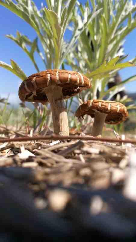 Comment faites-vous entrer le champignon dans votre corps?