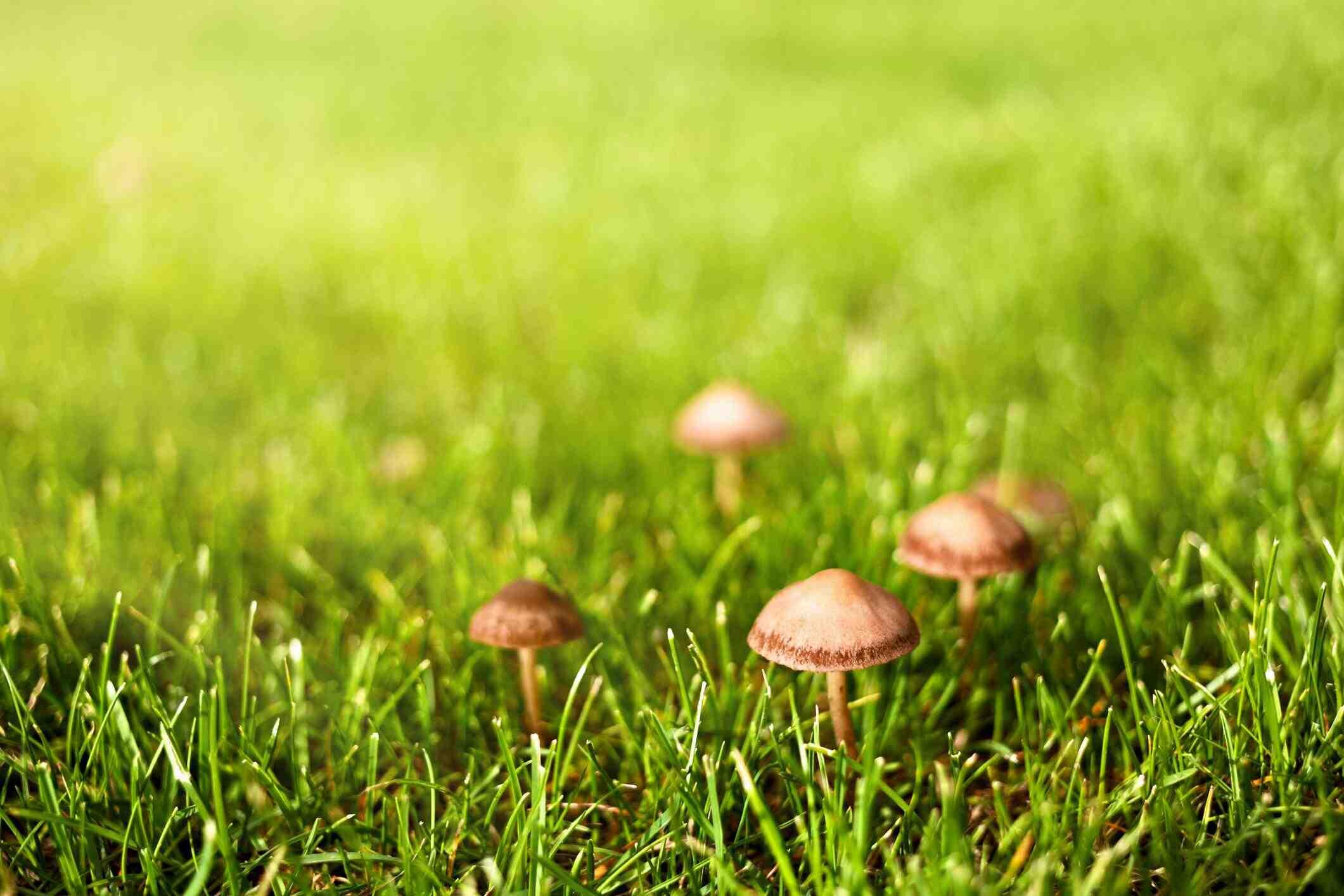 Comment looga champignons sur la peau naturellement?