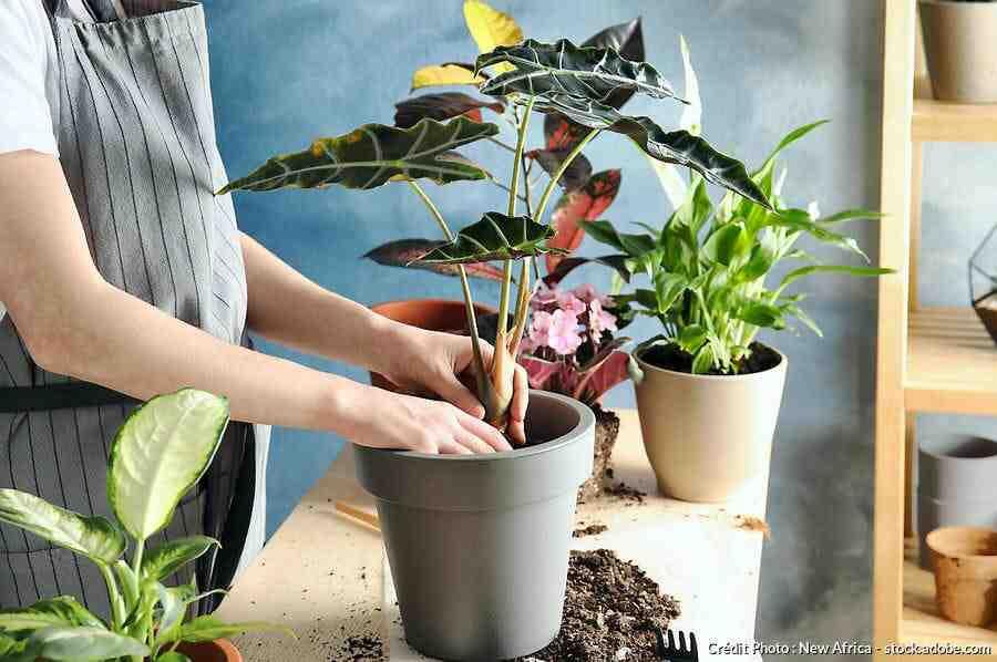 Comment nourrir les plantes vertes ?