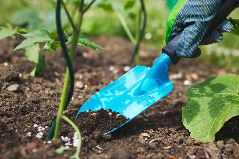 Comment nourrir une plante verte d'intérieur ?