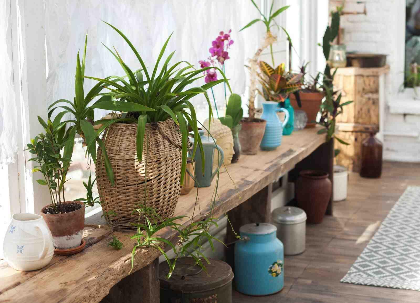Comment nourrir vos plantes d'intérieur ?