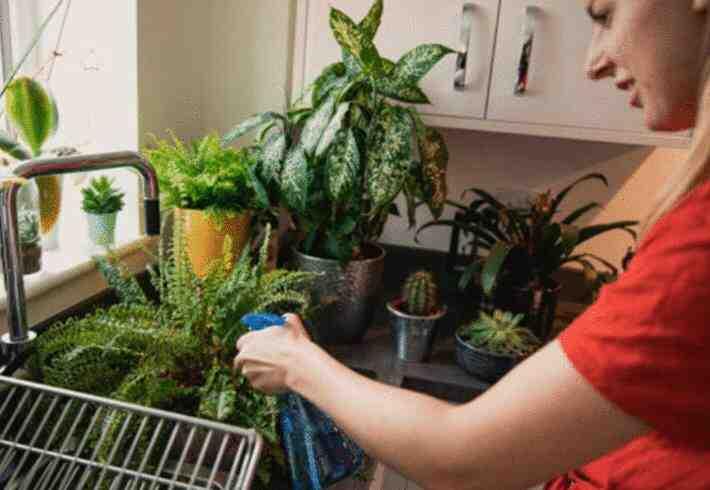 Comment nourrir vos plantes d'intérieur