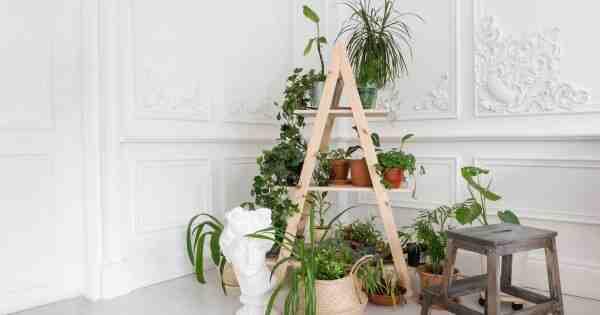 Comment prendre soin de vos plantes vertes ?