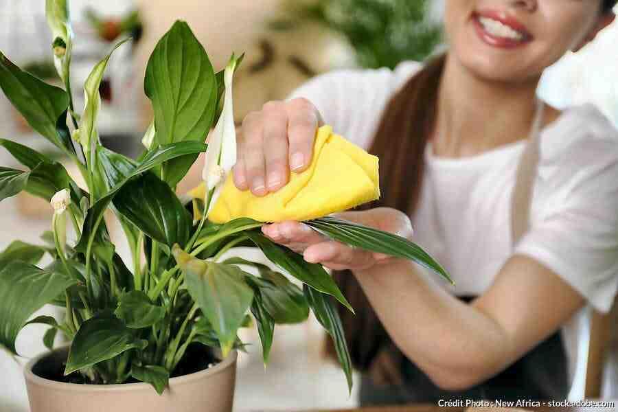 Comment prendre soin des feuilles de votre plante verte ?