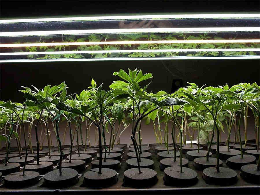 Comment récupérer une plante verte ?