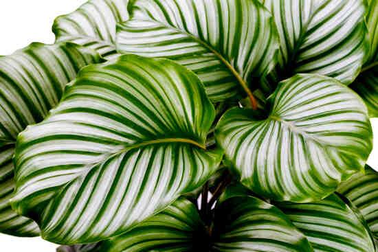 Comment savoir si une plante a trop ou pas assez d'eau ?