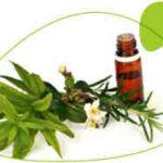 Comment se former à la phytothérapie ?