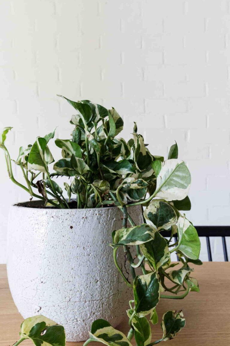Comment soigner ses plantes d'intérieur ?
