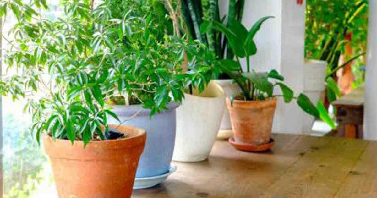 Comment soigner ses plantes vertes ?