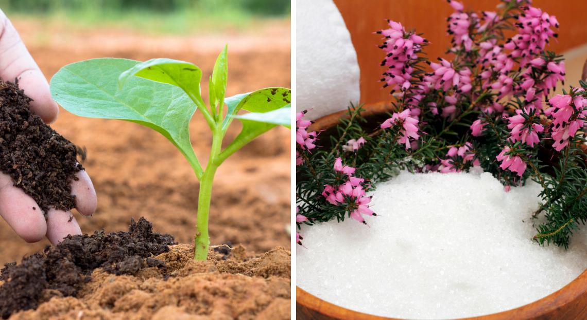 Comment utiliser l'engrais liquide pour les plantes d'intérieur ?