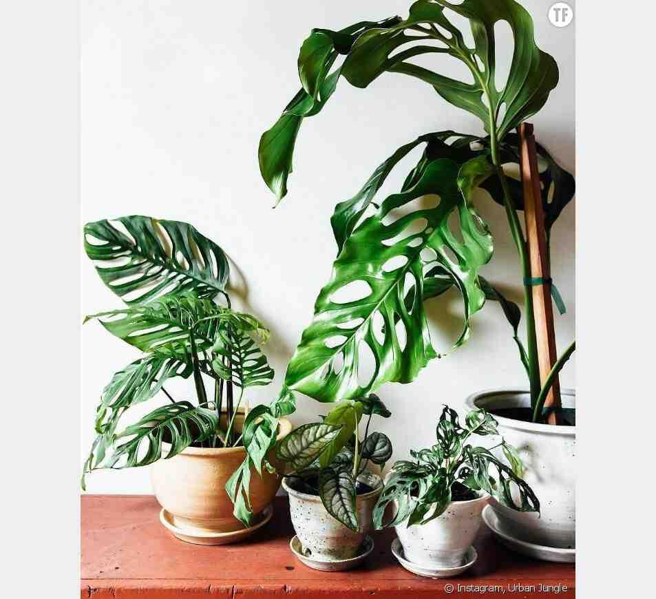 Pourquoi les feuilles des plantes vertes noircissent ?