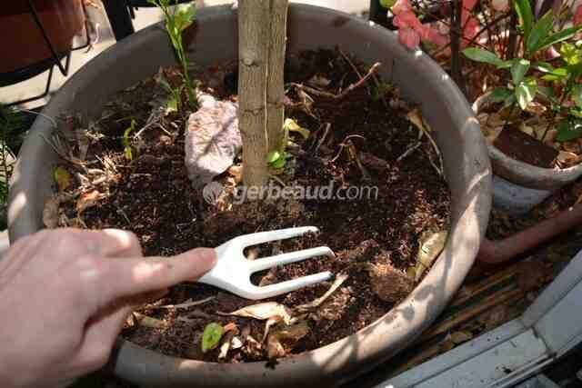 Quand mettre de l'engrais aux plantes d'intérieur ?