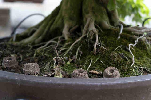 Quand mettre de l'engrais sur les plantes ?