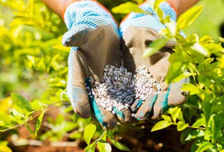 Quel engrais naturel pour les plantes d'intérieur ?