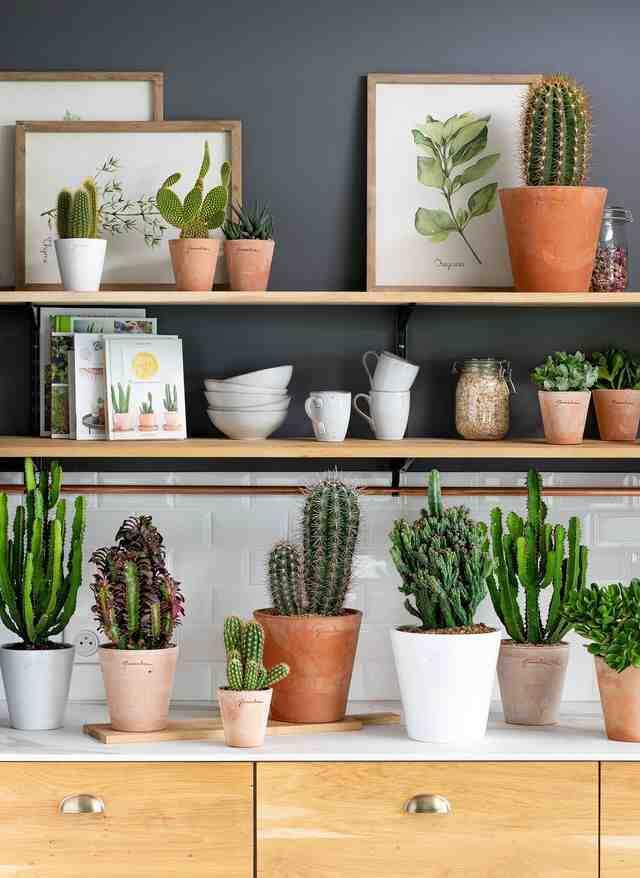 Quel engrais pour les plantes d'intérieur ?