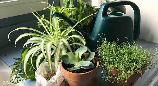 Quel est le meilleur engrais pour les plantes ?