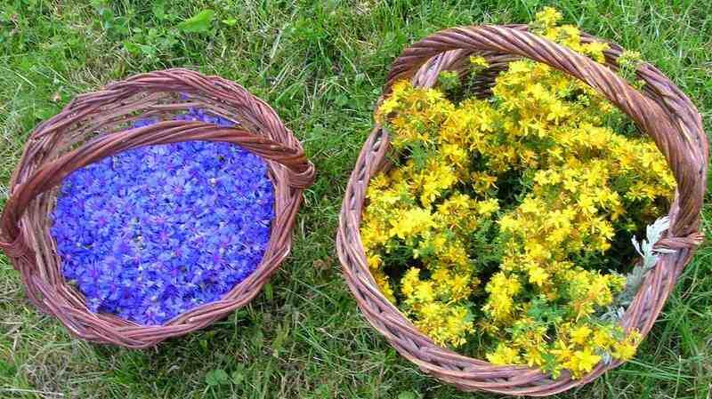 Quelle est la différence entre l'aromathérapie et la phytothérapie ?