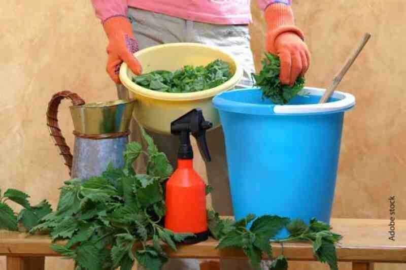 Quelles sont les recettes courantes pour les plantes d'intérieur?